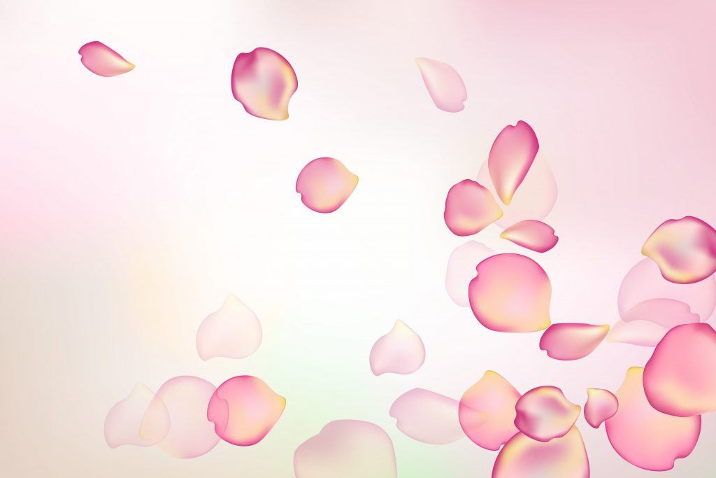 blurred pastel background rose flower petals