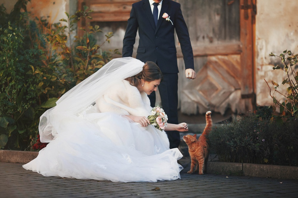 Planning a Pet Friendly Wedding